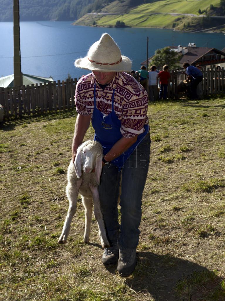 0631 Vernago in Val Senales, divisione pecore transumanza