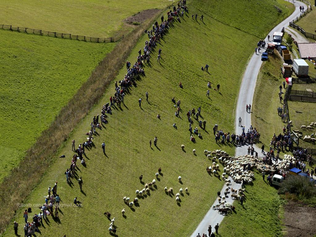 Transumanza 608 transumanza arrivo delle pecore a Vernago in Val Senales 0000