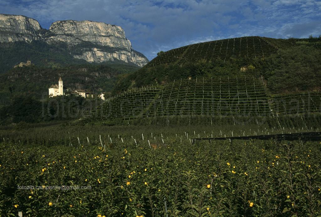 Vineyards, Missiano, VAlto Adige, South Tyrol, Italia, Italy; Europe