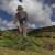 Alberto Campanile Hasselblad H3D-31 Sarn Pine Tree harvesting, Pino mugo harvesting, San Martino, Sarentino Valley, Alto Adige, Italy 2008-09-24 12:33:10 Alberto Campanile f/9.5 1/500sec ISO-100 28mm