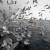 Norvegia inv 1277 Campanile   2005-03-18 00:00:00