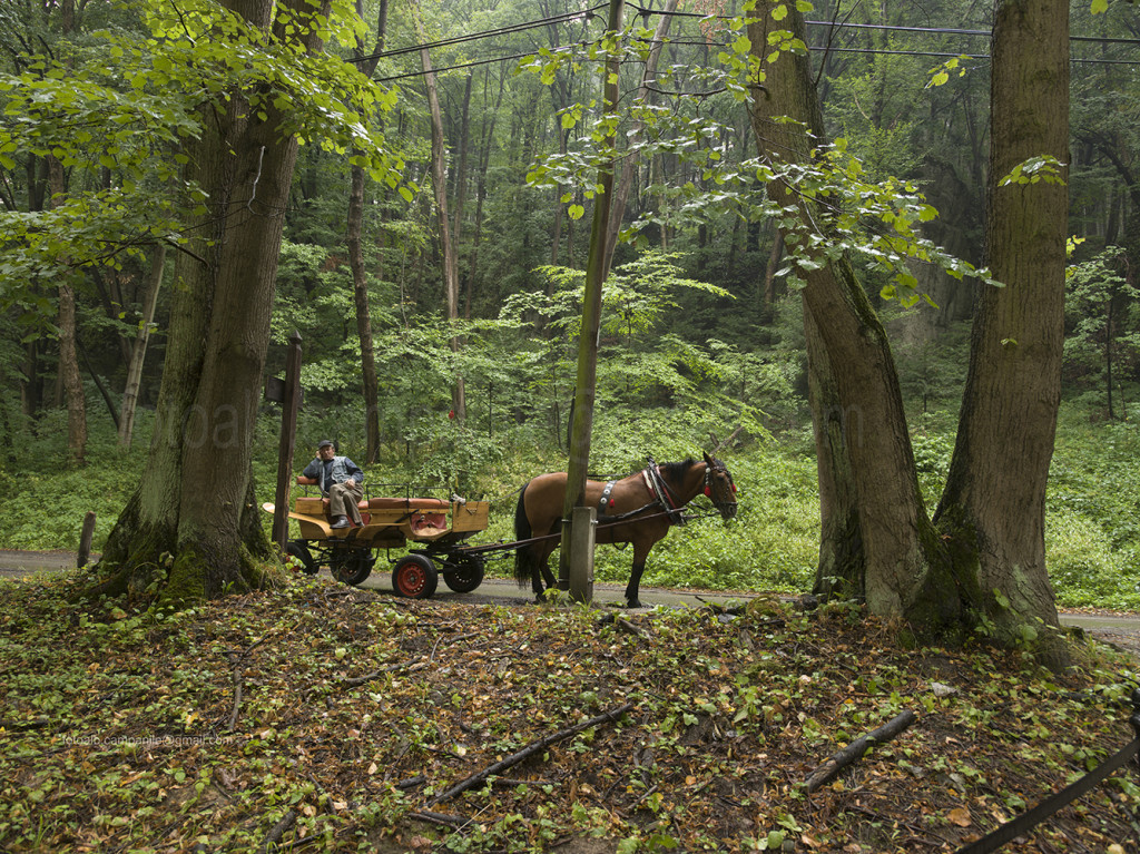 The forest, Ojcow, Ojcowski National Park, Poland, Europe