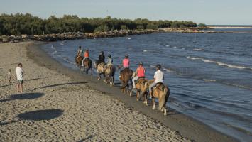 Horses, Bonelli di Porto Tolle, Polesine, Veneto, Italy, Europe Alberto Campanile Hasselblad H3D  2014-08-17 18:38:16 Alberto Campanile f/8 1/800sec ISO-200 70mm