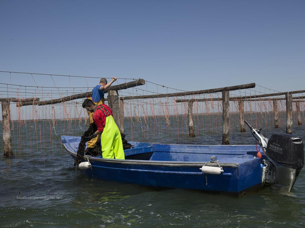 Mussels, Scardovari, Porto Tolle, Polesine, Veneto, Italy, Europe Alberto Campanile Hasselblad H3D  2014-05-24 10:44:02 Alberto Campanile f/8 1/500sec ISO-50 70mm