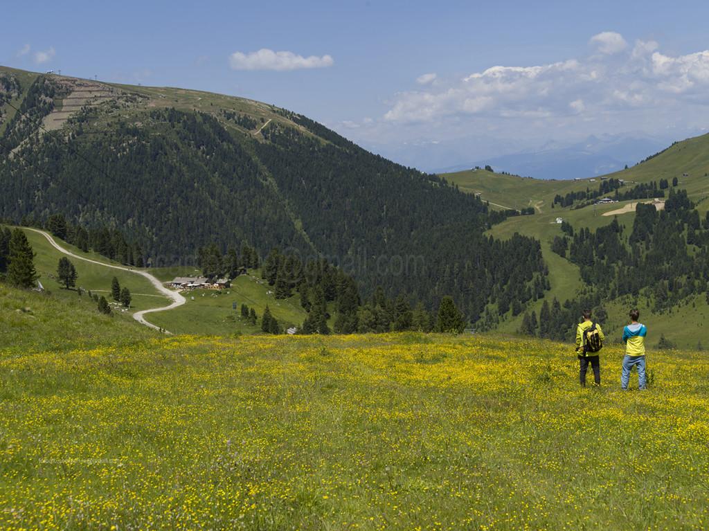 Pampeago 20949 Discesa da Rif Passo Feudo a Baita Caserina
