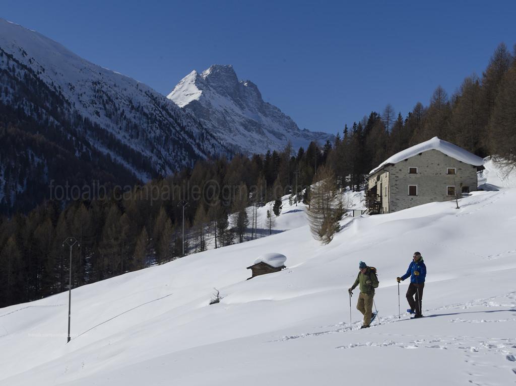 Bormio, Valtellina,Val Viola 780 tra Arnoga e Malga Caricc