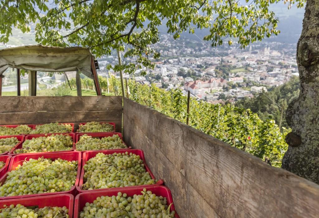 masi vinicoli Gallo Rosso