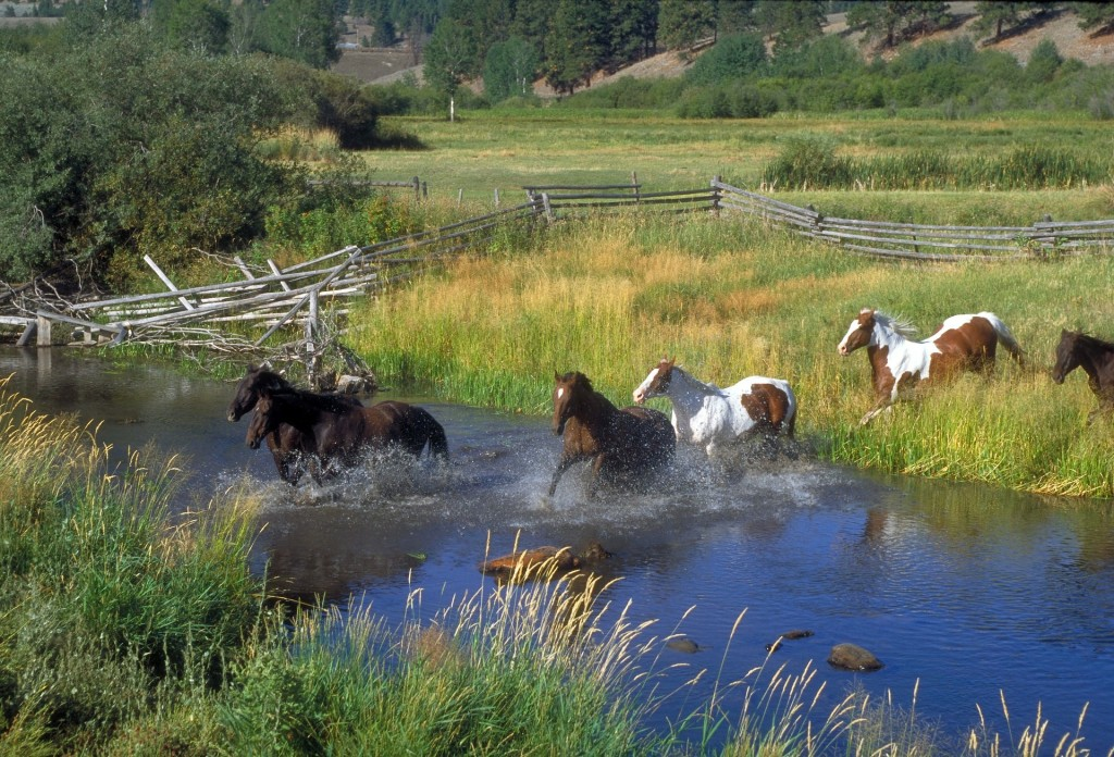 horses-78223_1920