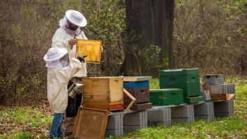 beekeeper-4426003_1920 (1)