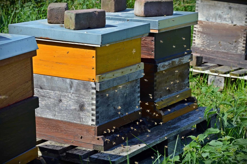 bees-1578726_1920 (1)