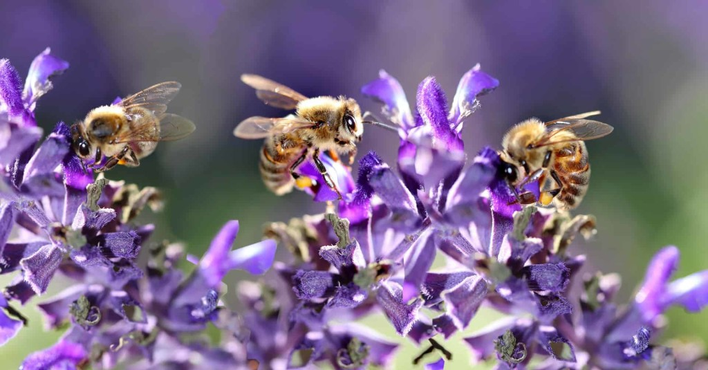 bees-4281171_1920 (2)