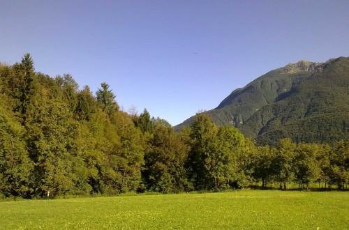 Friuli, ripartiamo da boschi e foreste