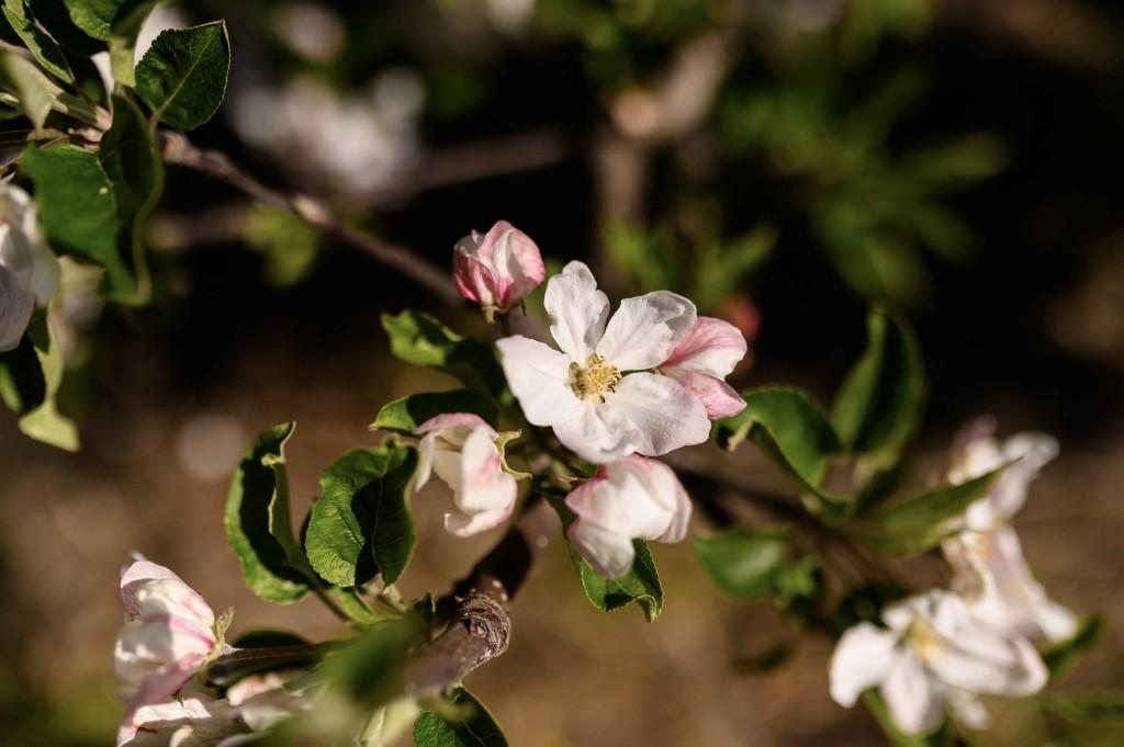 fiorimelo (2)